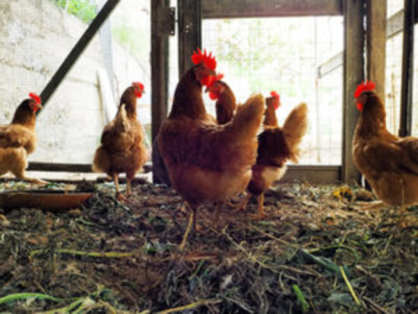 Backyard Animal Housing Safety